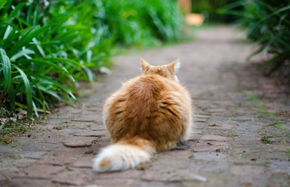 Look Past the Cute Cat