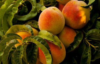 The Peach is Charged with the Grandeur of God