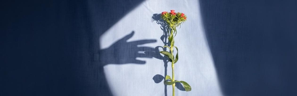 Shadows and Light on Palliative Care